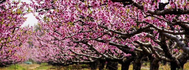 植物园郁金香